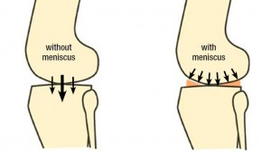 Why Meniscus Is So Important?